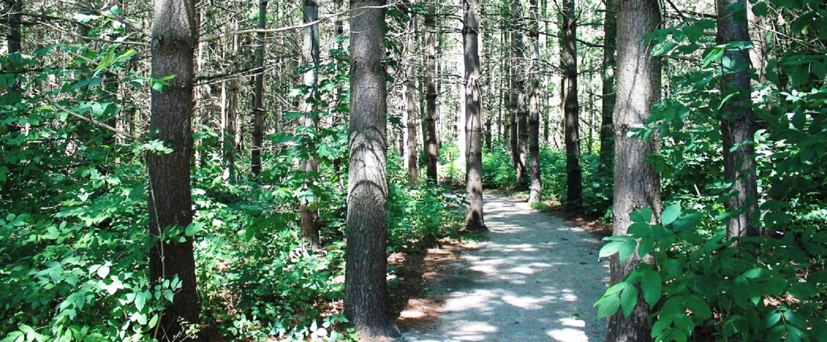 Conservation Area trail
